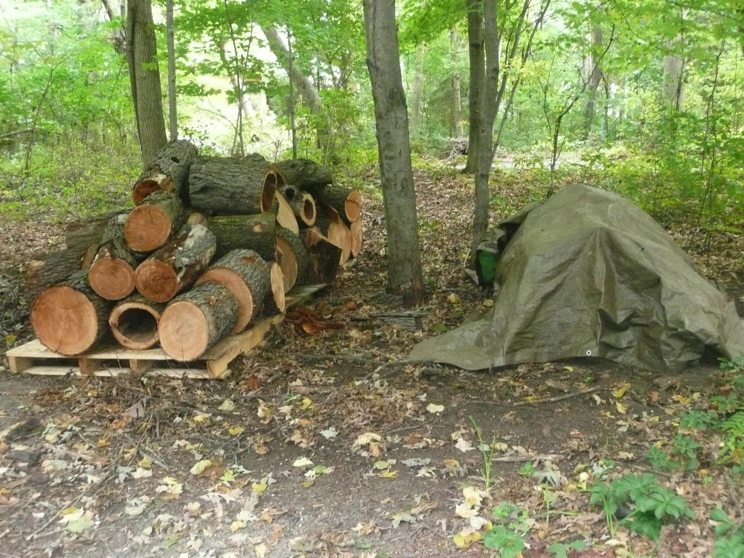 Ebony wood tree