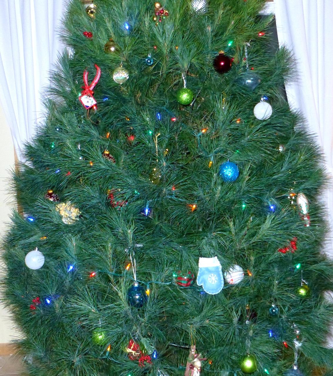 White Pine Christmas Tree | Simply Norma