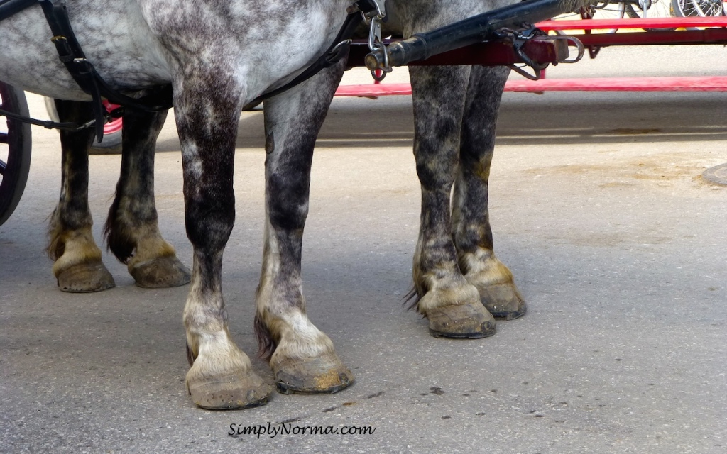 Horses, Mackinac Island, Michigan