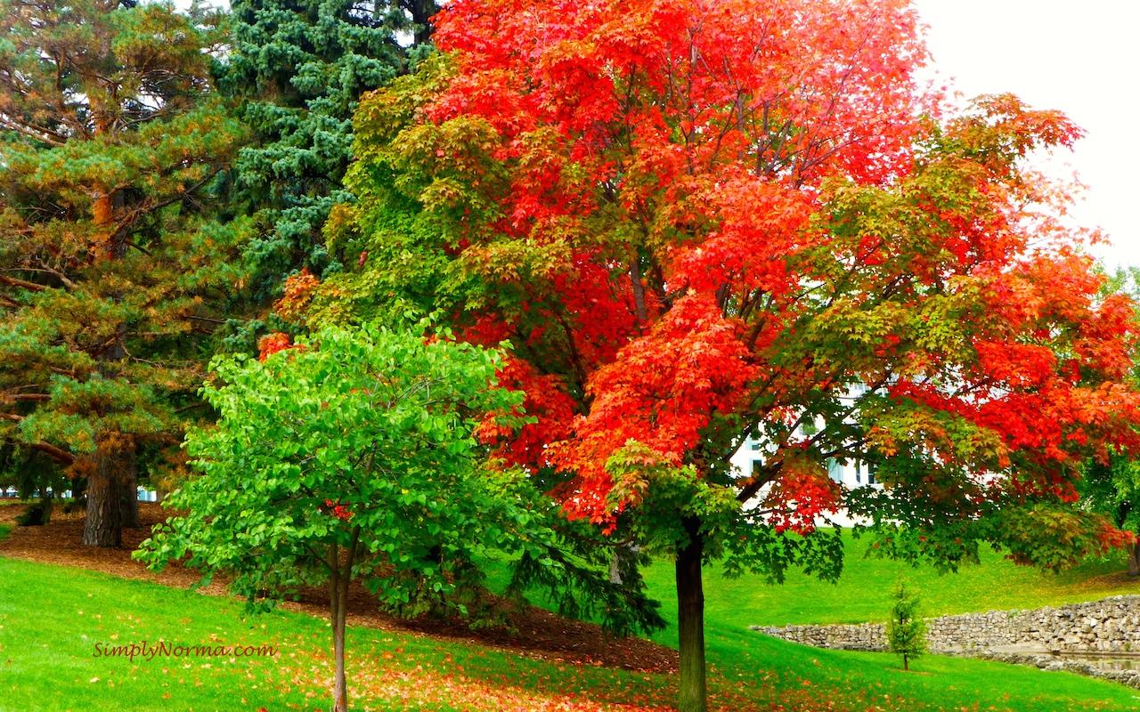 Como Park Conservatory, St Paul, Minnesota