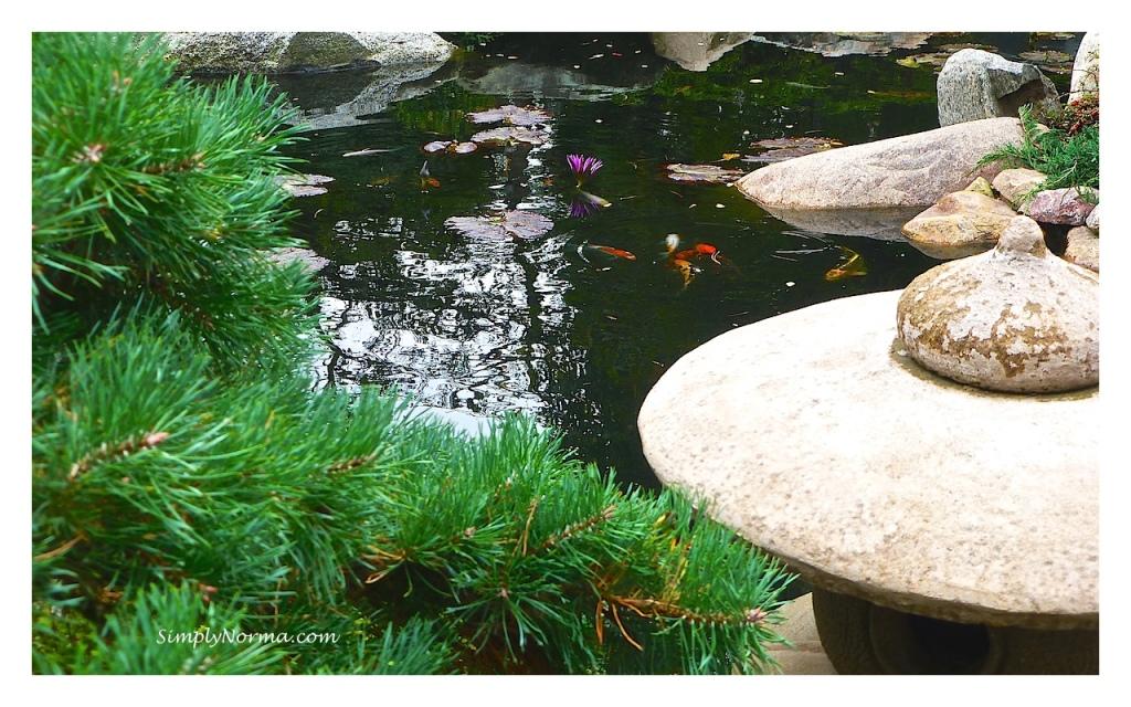 Japanese Garden, Como Conservatory